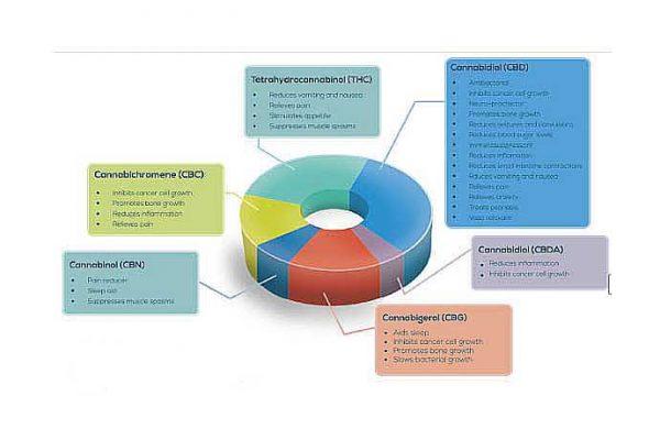 CBD ingredients chart