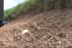 how to play buried ball in the face of a sand trap.