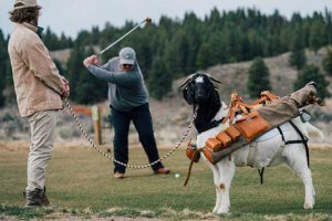 Goat caddies are used at Silvies Valley Ranch in Oregon